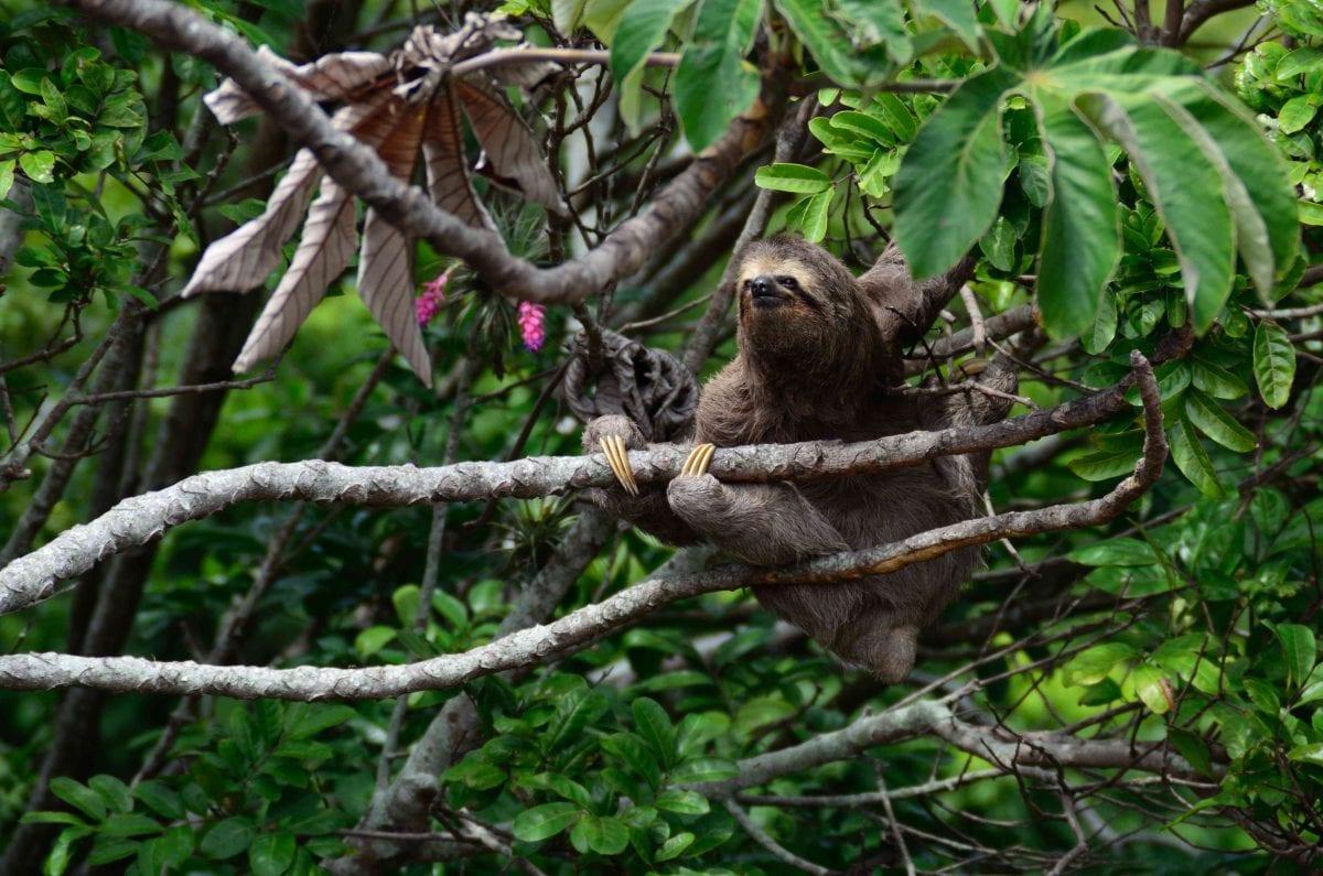 biometric research stimuli sloth