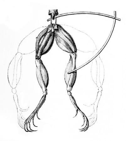 galvani-electricity-eeg