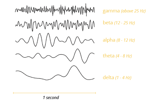 brain wave frequencies