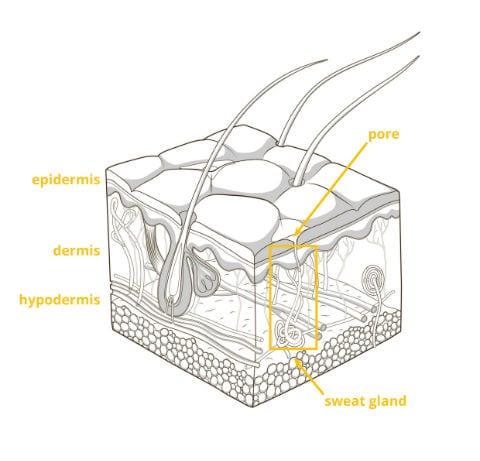 Skin schematic