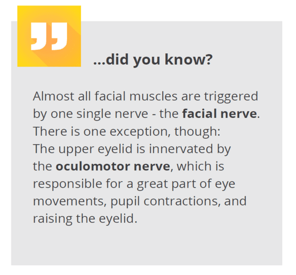 did you know - facial nerve