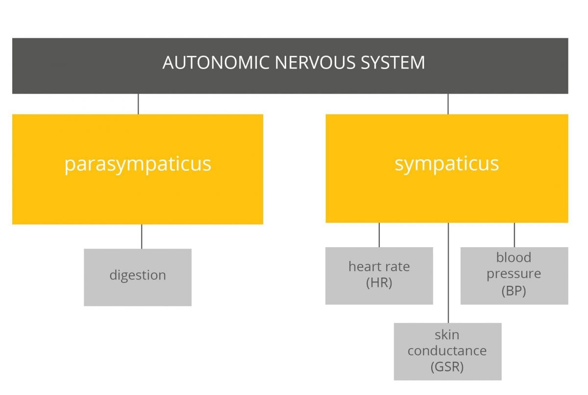 Autonomic nervous system activities