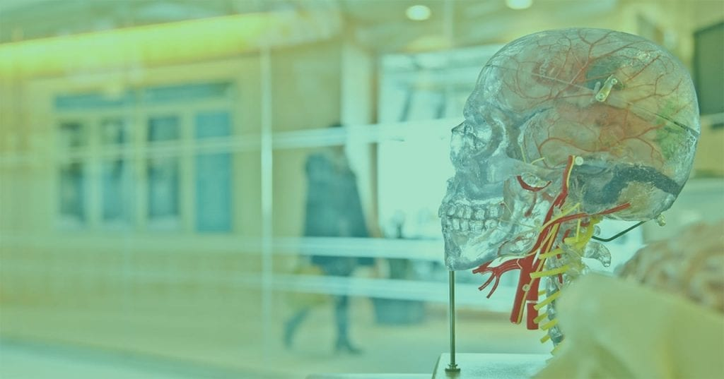 Transparent skull to display veins and arteries
