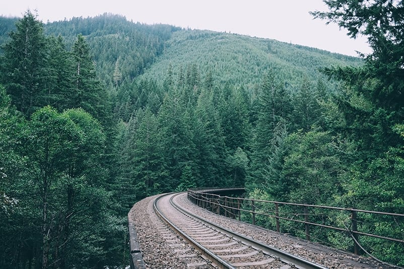 railroad tracks in the woods