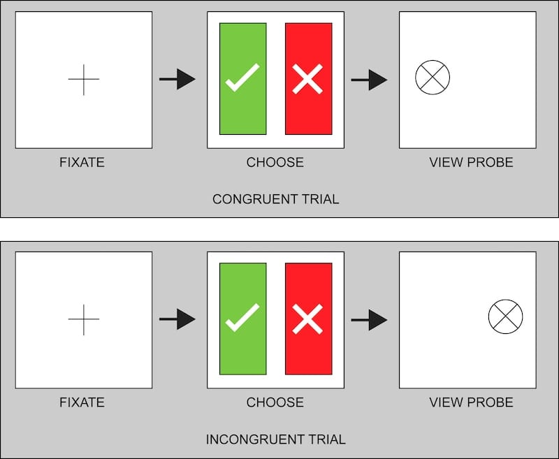 congruent trial and incongruent trial illustration